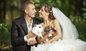 Отрицательные стороны свадебной видеосъёмки