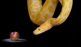 Токсичная красота: как работает змеиный яд в уходовой косметике