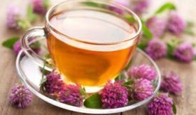 Клевер — полезный витамин в ваших блюдах