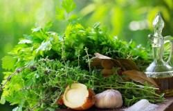 Будьте осторожны во время беременности с лекарственными растениями!