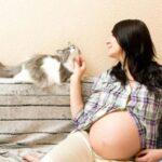 Опасны ли кошки беременным?